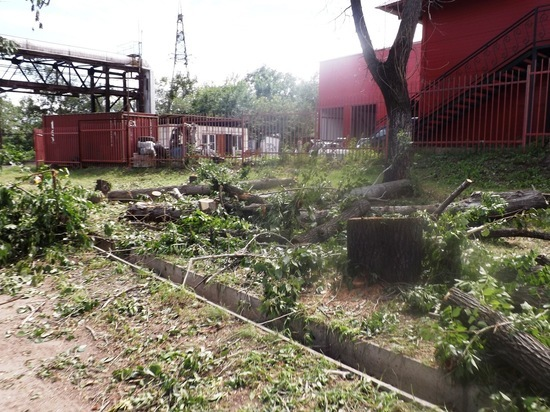 Более 6 тысяч саженцев высадят в Хабаровске