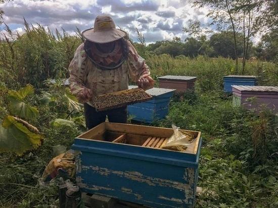 На острове активно развивается пчеловодство
