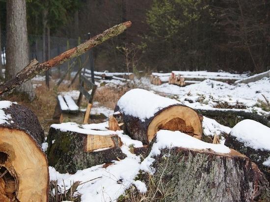 В Бурятии на бывшего лесничего завели уголовное дело за подлог
