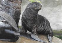 В зоопарке раскрыли тайну имени северного котика