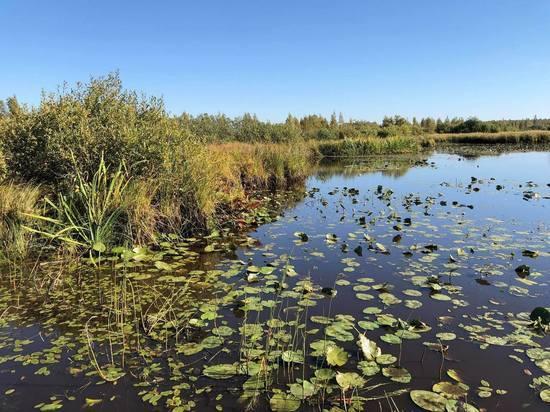 Псковское «солсбери»: со своей «грязью» в чужое болото