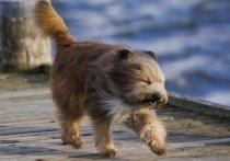МЧС предупреждает о сильном ветре в Калуге