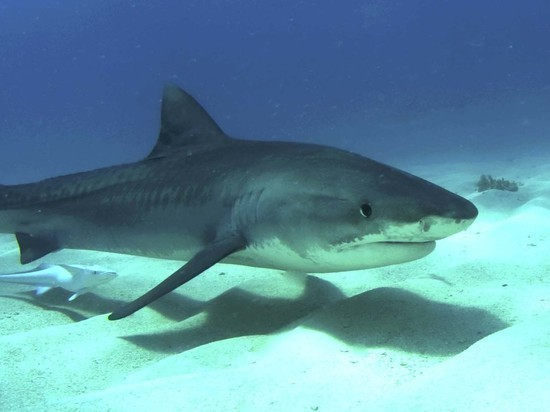 В Австралии акула напала на туристку