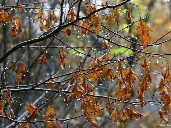 Холод и дожди надвигаются на Тверскую область