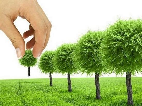 Стало известно, как будут озеленять Хабаровск в ближайшие годы
