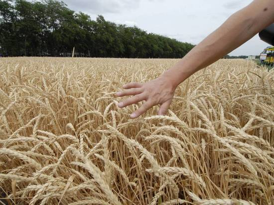 Американские фермеры оказались под угрозой разорения из-за рекордного экспорта российской пшеницы