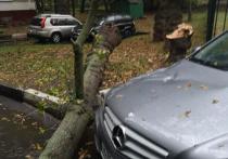 Две женщины пострадали в результате падения деревьев в Москве