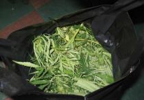 В Тамбовской области изъяли 800 граммов марихуаны