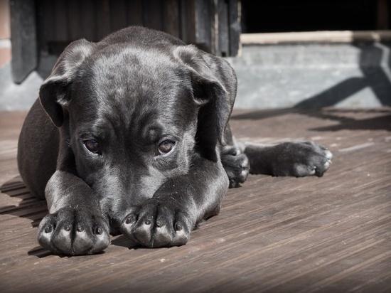 В магазине Киева предложили сдавать собак в камеры хранения