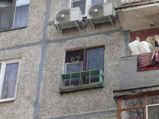 Жители дома в Пушкино повесили клетки с кошками за окном