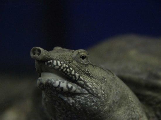 Омская «летающая» черепаха Матильда станет звездой телевидения