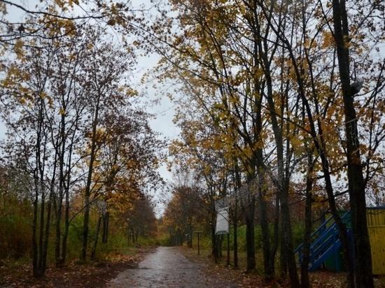 В кировском дендропарке начали благоустраивать пешеходную зону