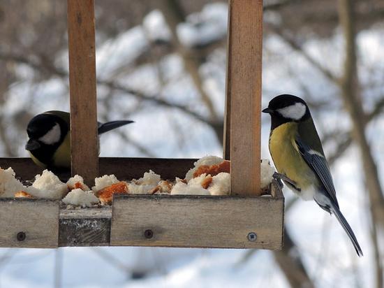В Москве откроют парк для птиц с естественной темнотой