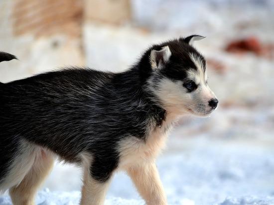 Охотник засудил авиакомпанию, заморозившую в полете элитного щенка