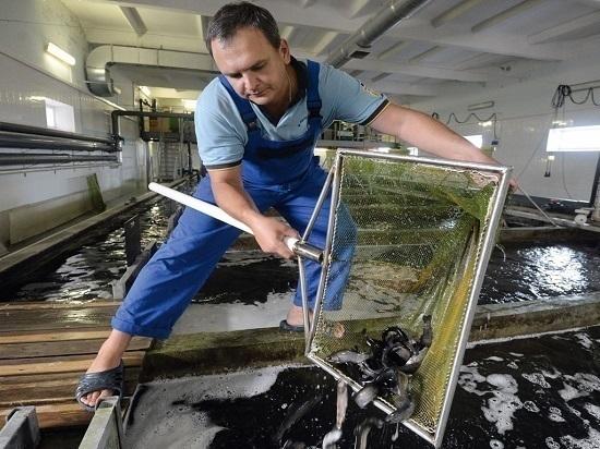 Какую функцию выполняют рыбоводные заводы
