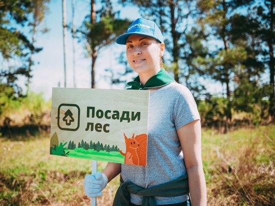 В Мордовии восстановлением лесов займутся активисты