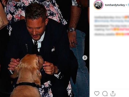 Том Харди умилил поклонников, подружившись с собакой охраны