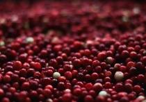 Первая половина осени в средне-русской полосе – это «высокий» ягодный сезон