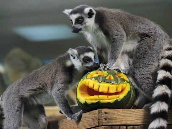 В новосибирском зоопарке проведут конкурс хэллоуинских тыкв