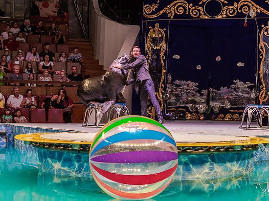 В Воронеже гастролирует цирк на воде