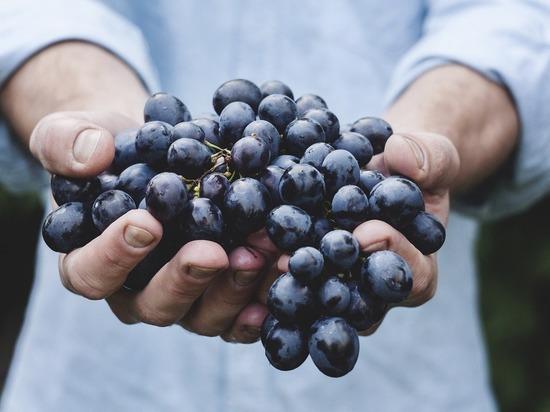 В винограде нашли вещество, спасающее от рака
