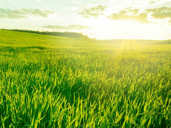 Кто и как должен убирать траву на гектарах