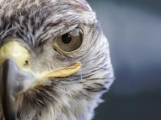 Верховный суд Бурятии изменил приговор соколиным браконьерам