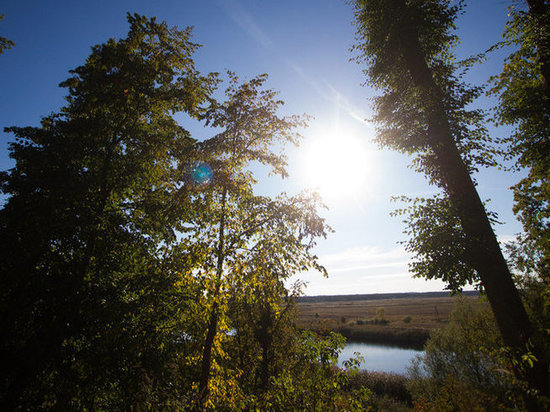 Калининградская грибница заблудилась и прошла 50 километров