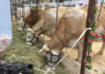 Вологодская область представляет свои достижения на агропромышленной выставке «Золотая осень»