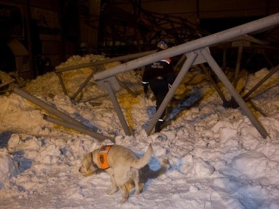 Владельца конного клуба «Аллюр» осудили за обрушение крыши