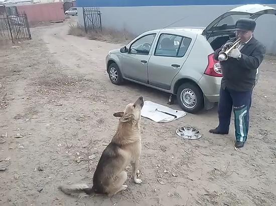 В Улан-Удэ поющая собака исполнила «Индейское лето» Джо Дассена