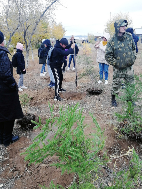 В  Бурятии лесники с детьми восстанавливают леса и озеленяют школы