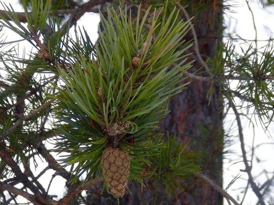 Испугавшись деревьев, жительница Тверской области пошла в суд