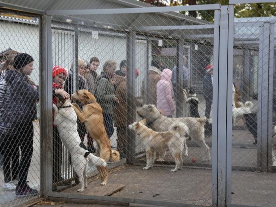 Нижегородские школьники собрали средства для безнадзорных животных