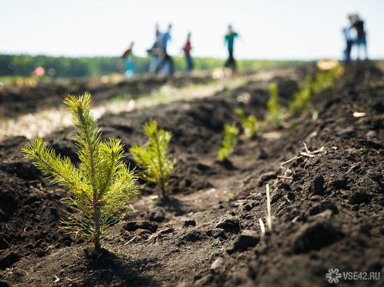 В Кемерове высадят символичное количество хвойных деревьев