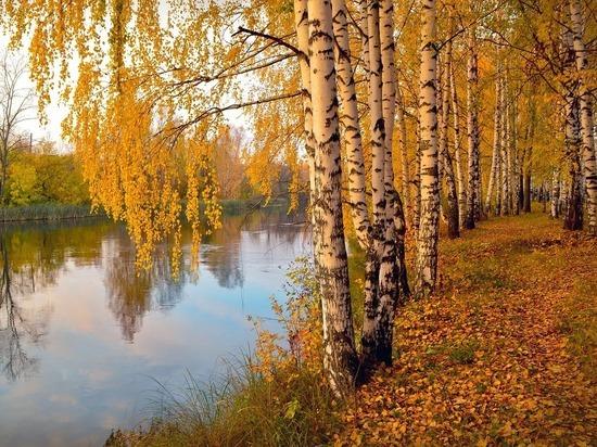Москве пообещали абсолютную золотую осень к понедельнику