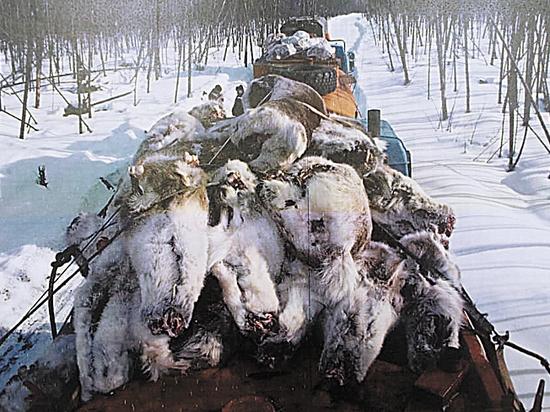 Зачем убивают российскую охоту: Минприроды нанесло неожиданный удар
