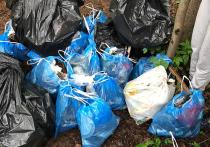 Забег за мусором: у москвичей появилось новое увлечение
