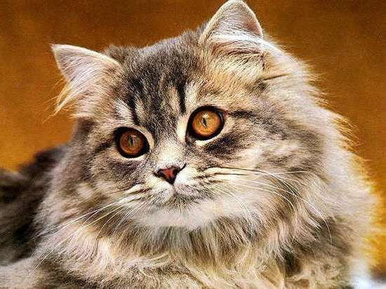 Кошка дважды спасла британку от рака