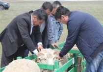 Первая партия калмыцкой баранины на экспорт уйдет в ноябре