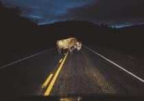 Как не стоит ездить в темное время суток