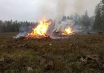В Андреапольском районе Тверской области пожарные оперативно отработали термическую точку