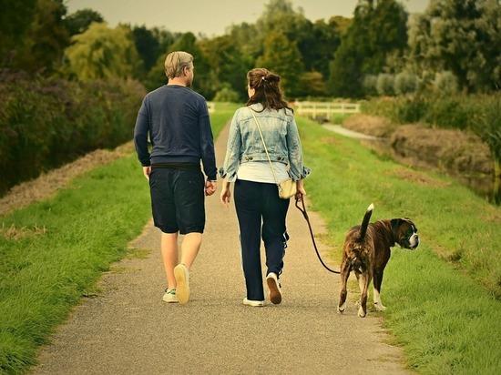 Польза регулярных прогулок на природе для психики научно доказана