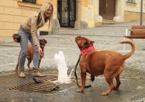 Группа исследователей, представляющих Университет Эмори в Атланте, высказали предположение, что собаки способны понимать человеческую речь