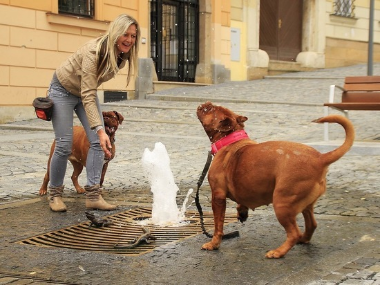 Собаки действительно понимают речь хозяев, выяснили зоологи