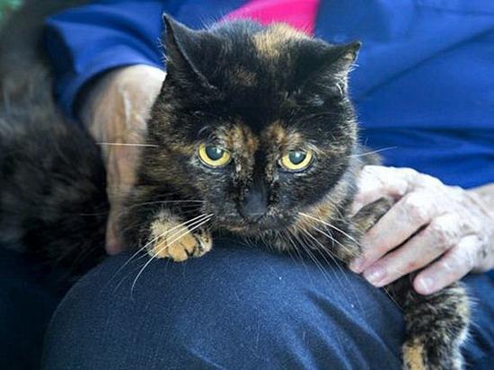Когда кошка постарела: чем помочь любимице