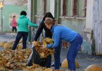 Армию работников тульской администрации мобилизовали убирать листву