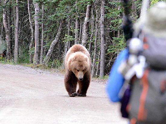 Пропавшего в Карымае ребенка загрызли медведи