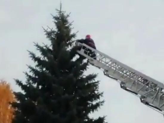 Спасателям пришлось снимать с верхушки елки душевнобольного тамбовчанина