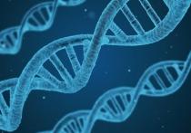 Международная группа биологов провела исследование, посвящённое взаимосвязи между генами человека и продолжительностью его жизни